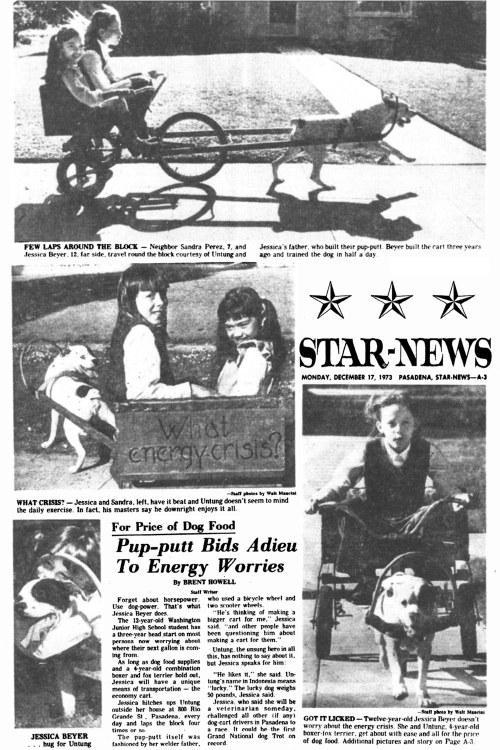 Dog_Cart1973